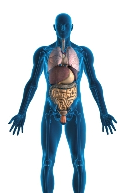 Some Interesting and Amazing Facts about the Human Body
