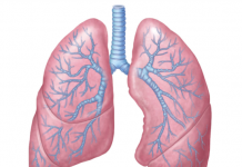 medical knowhow on goodpasture's syndrome
